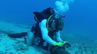 Cáp biển AAG lại gặp sự cố – Internet không bị chậm?