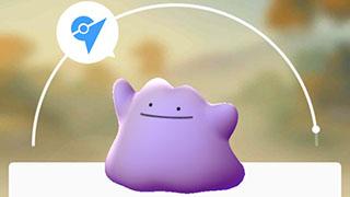 Pokemon GO – Bắt Zubat, Pidgey hay Rattata có cơ hội nhận được Ditto