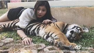 """""""Cạn lời"""" với chiêu lôi kéo người xem của nữ streamer khi ngủ chung với... hổ"""