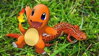 Ý tưởng thiết kế hình ảnh của các Pokemon đã được tạo ra như thế này